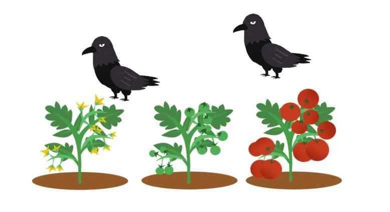 家庭菜園のカラス対策