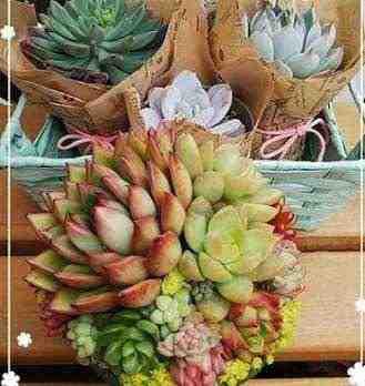 女友達の誕生日プレゼント 多肉植物の寄せ植えミニ鉢が3つ